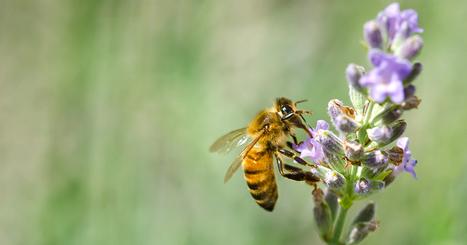 Les pesticides tueurs d'abeilles sont enfin bannis de France