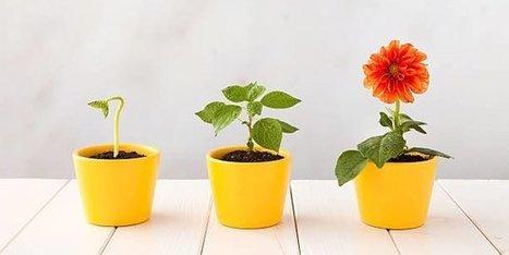 Loi Pacte : quels sont les leviers pour faire grandir nos entreprises ?