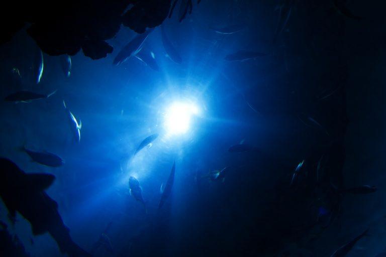 Océans : il y aurait beaucoup plus de plastique que prévu dans les profondeurs