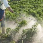 Officiel: Bayer rachète Monsanto, au prix fort