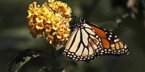 Pesticides: les néonicotinoïdes multiplient par trois le déclin des pollinisateurs sauvages