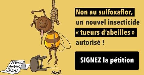 PETITION – Non au sulfoxaflor, un nouvel insecticide « tueurs d'abeilles » autorisé !