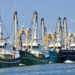 Peut-on électriser les poissons pour pêcher ?