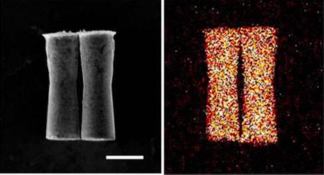 Première : Des micro-machines testées dans un organisme vivant