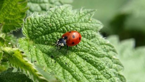 Près de 80% des insectes auraient disparu en Europe
