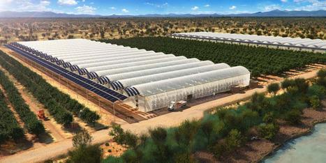 Seawater Greenhouse condense l'humidité de l'air pour l'irrigation grâce à la fraîcheur de l'eau de mer