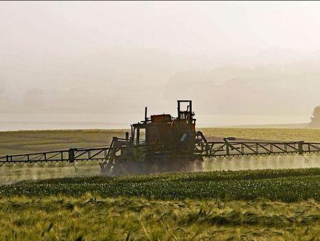 Une solution pour empêcher les OGM de se répandre dans la nature