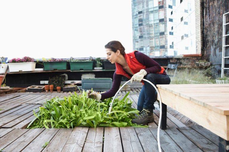 Végétaliser la ville : quand le vert remplace le gris