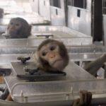 Vivisection : finalement, la Commission européenne met à la trappe les 1'170'000 signatures des pétitionnaires et maintient la torture animale