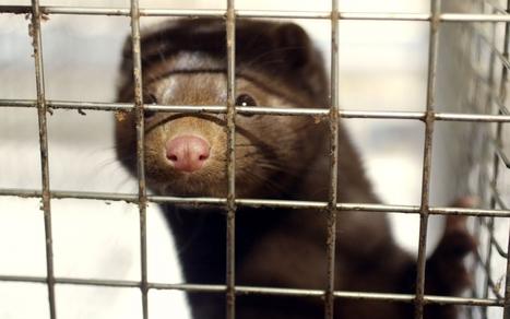 Voici les mammifères les plus menacés en France