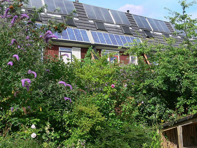 Agriculture urbaine : le vert à la reconquête de la cité