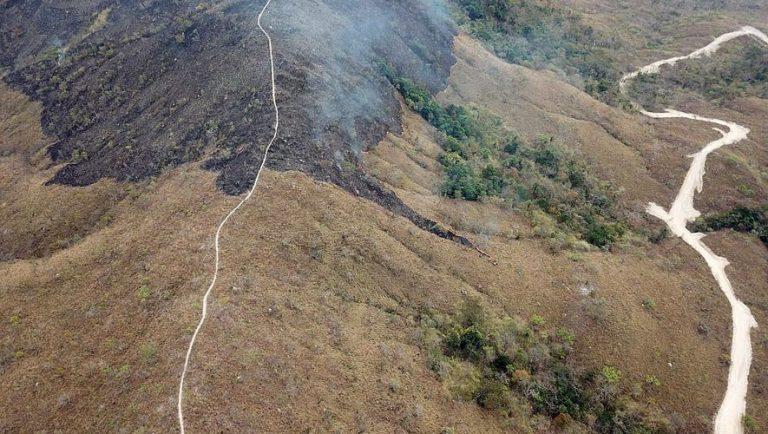 Amazonie : l'armée envoyée en forêt pour lutter contre les incendies