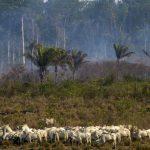 Biodiversité, océan de verdure, «puits de CO2″… pourquoi il faut sauver l'Amazonie