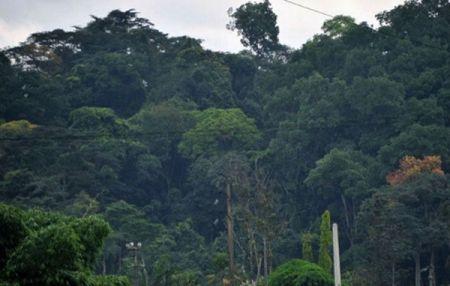 Côte d'Ivoire : le gouvernement veut faire passer le couvert végétal de 11 à 20 % d'ici 2040