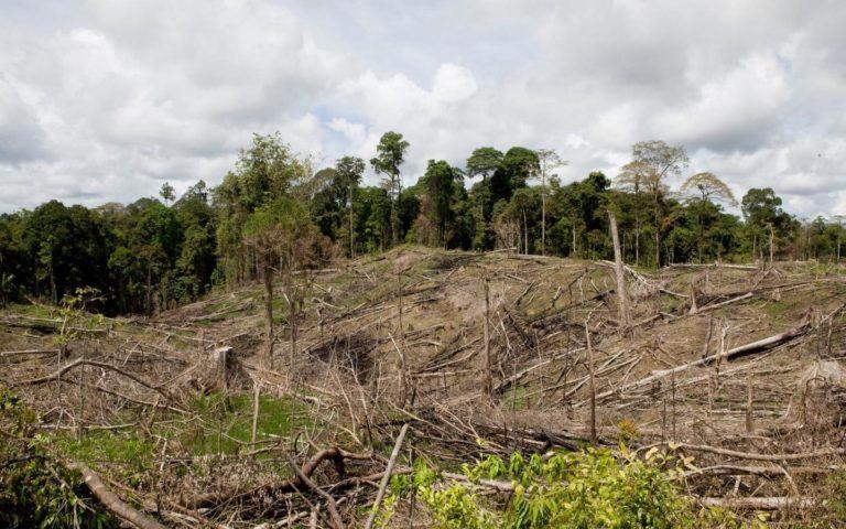 Crise climatique : le GIEC va dénoncer la terrible réalité de la déforestation et de la production de viande – 7seizh.info