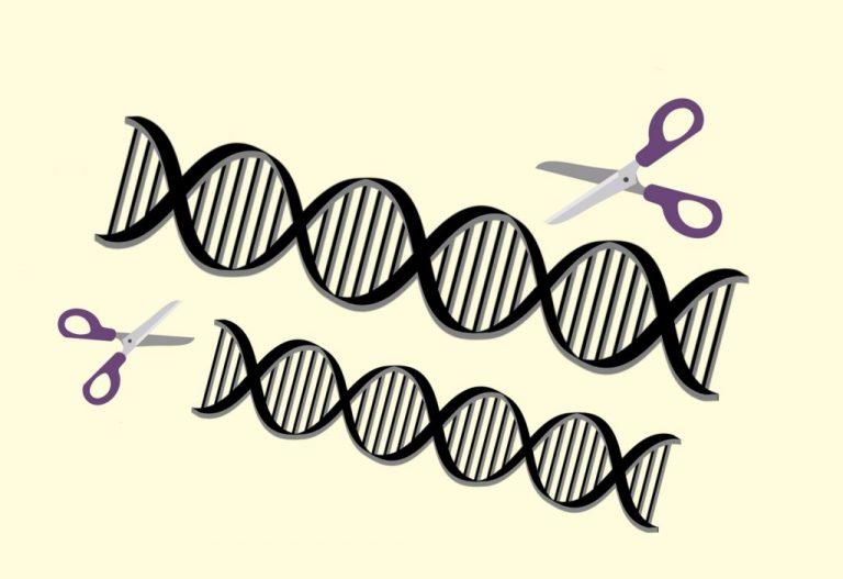 CRISPR : les ciseaux génétiques peuvent maintenant modifier plusieurs gènes simultanément – Sciences – Numerama