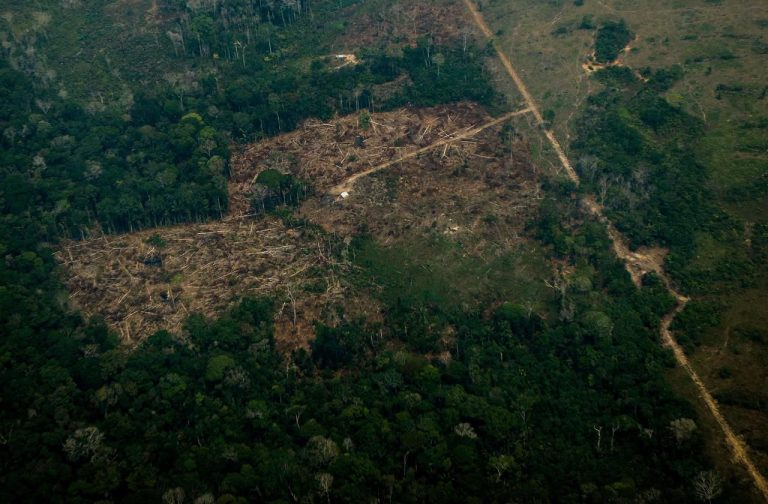 Des arbres transgéniques pour sauver les forêts ? L'idée germe mais peine à pousser