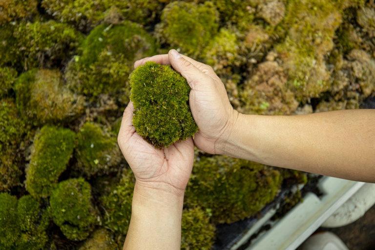 La mousse qui absorbe la pollution atmosphérique nettoie les points chauds en Europe