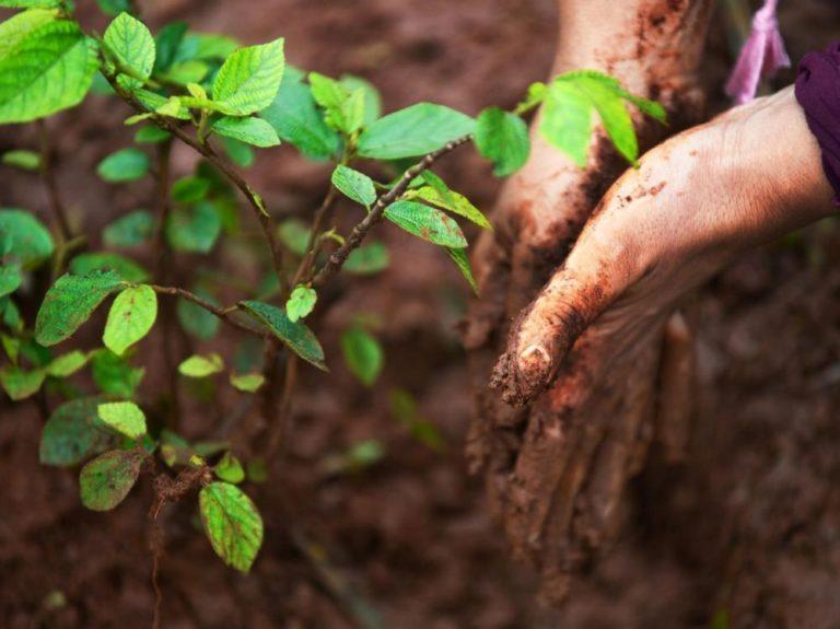 L'Ethiopie va planter 4 milliards d'arbres pour lutter contre le réchauffement climatique
