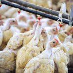 200 personnalités réclament la fin de l'élevage intensif dans une tribune