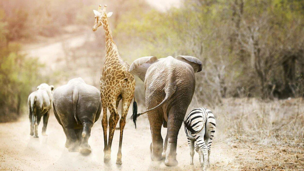 Tag « Extinction des espèces »