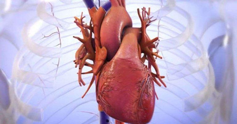 Après Tel-Aviv, un coeur humain imprimé en 3D aux États-Unis