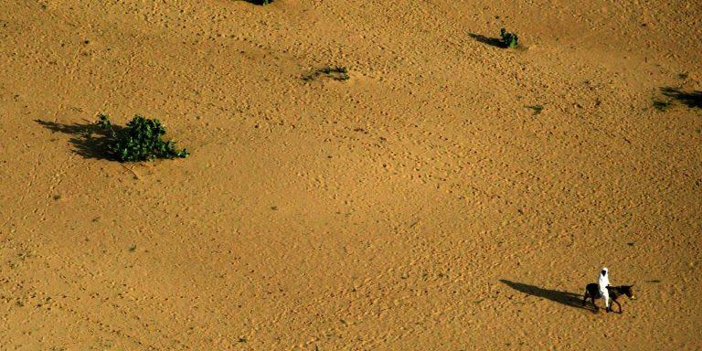 Au Tchad, la sécheresse décime les récoltes et fait craindre une explosion de l'insécurité alimentaire