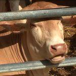 Beef Carbon (Boeuf Carbone) : les éleveurs veulent réduire leur empreinte carbone