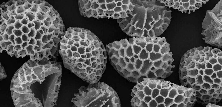 Dépolluer l'eau grâce à des spores | Le blob, l'extra-média
