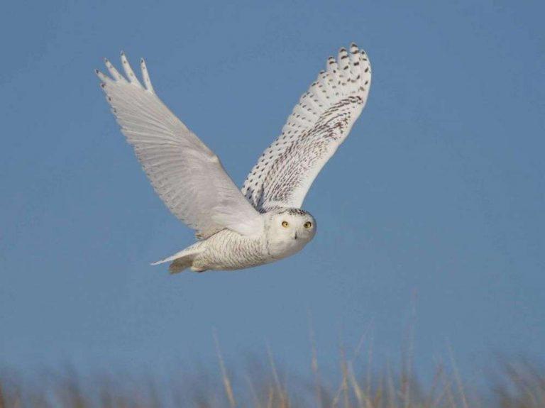 Extinction massive en Amérique du Nord : en 50 ans, 1 oiseau sur 4 a disparu