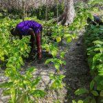 Gabon : comment passer de l'exploitation du pétrole au travail de la terre ?
