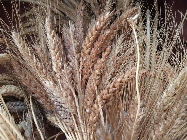 Paysans-chercheurs : ils régénèrent l'agriculture