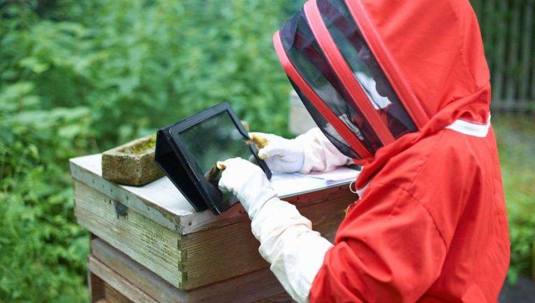 Quand les ruches connectées viennent au secours des abeilles