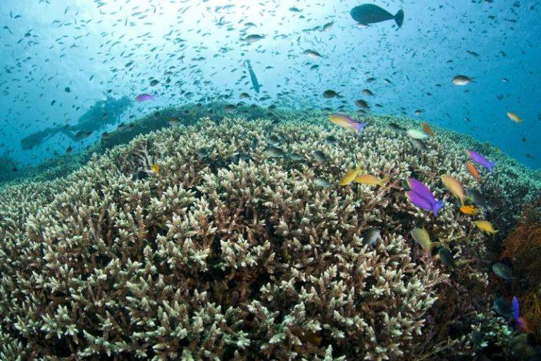 [Science] La reproduction de coraux en laboratoire laisse espérer de pouvoir repeupler les récifs abîmes