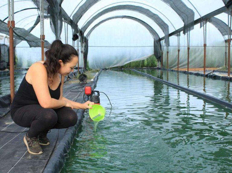 Une algue vertueuse cultivée en pleine campagne dans les Landes – Curieux!