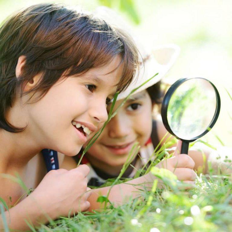 Dossier sur l'écologie expliquée aux enfants : environnement, écologie, biologie, développement durable