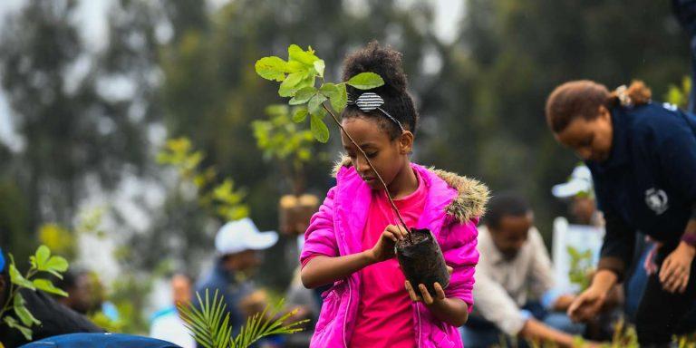 Face au réchauffement climatique, l'ONU mise sur les forêts urbaines en Afrique
