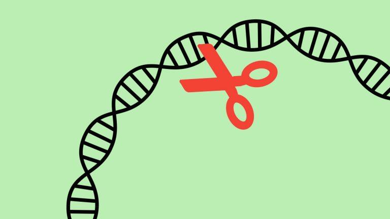 Finalement, rien ne prouverait que les « bébés CRISPR » risquent de mourir plus tôt – Sciences – Numerama