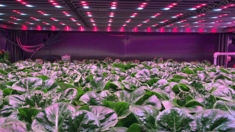 How 3D Printing, Vertical Farming, and Materials Science Are Overhauling Food