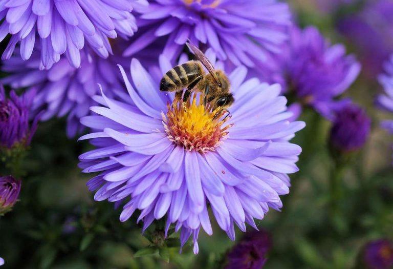 Ils plantent 15 millions de fleurs sauvages pour sauver les abeilles – Pepsnews – Le site des news positives