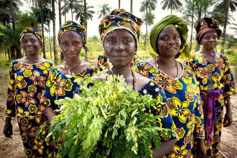 Les femmes rurales sont des pionnières de l'énergie verte et de l'action climatique, selon l'ONU