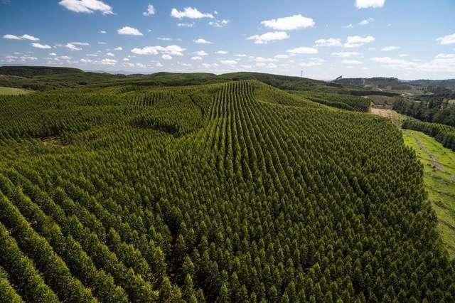 La plantation massive d'arbres contre le réchauffement climatique divise les scientifiques