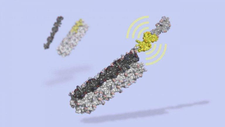 LOCKR : une protéine totalement artificielle qui reprogramme des cellules