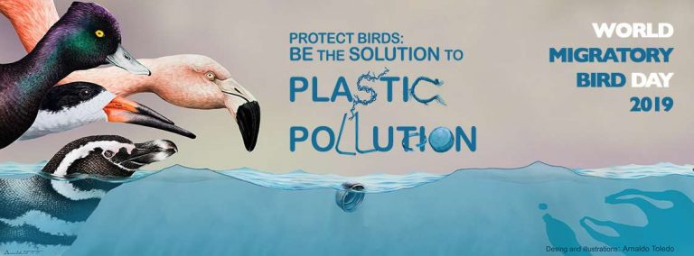 Protect Birds: Be the Solution to Plastic Pollution! | World Migratory Bird Day