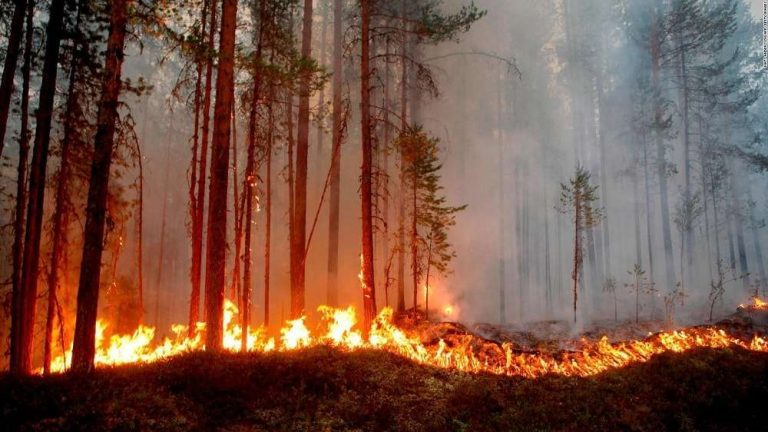 Un ingénieur crée un gel pulvérisable ultra-efficace pour lutter (en avance) contre les feux de forêt