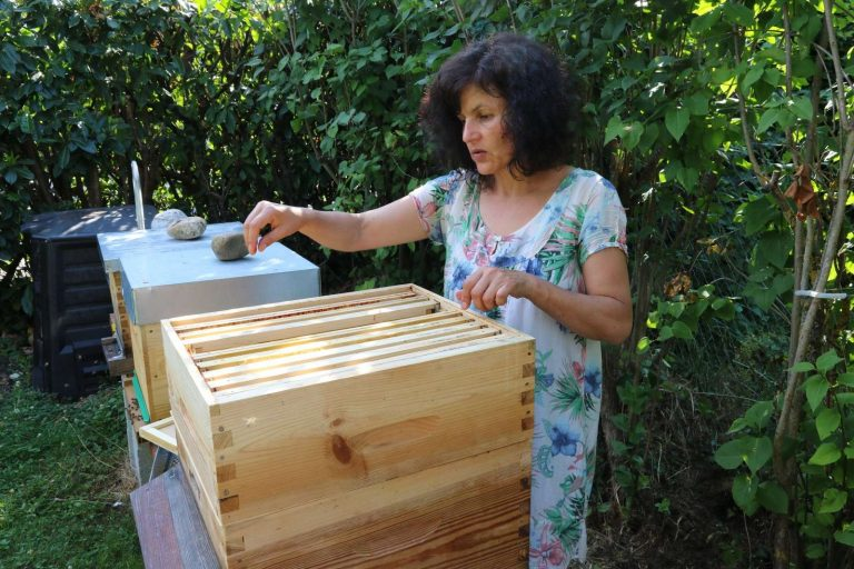 Une apicultrice primée pour son procédé  anti-varroa sans produits chimiques