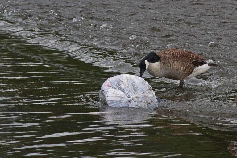 Celui qui veut nettoyer les océans veut également s'attaquer aux rivières