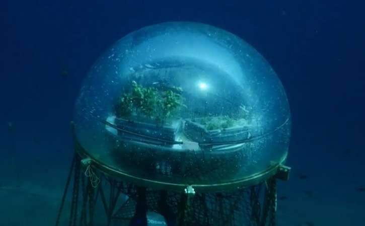 Et si on cultivait sous la mer ? Une expérimentation est en cours