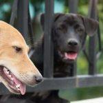 Le Sénat américain adopte à l'unanimité un projet de loi faisant de la cruauté animale un crime fédéral