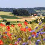 Plus la biodiversité est élevée, plus les rendements sont importants dans l'agriculture